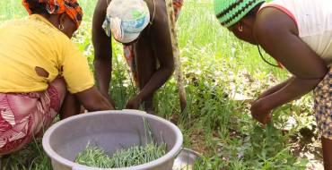 Économie guinéenne : les femmes comme actrices majeures